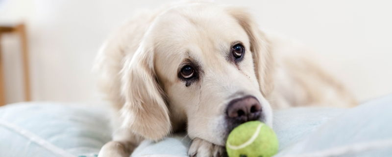 Tennisbolde_Hund_web